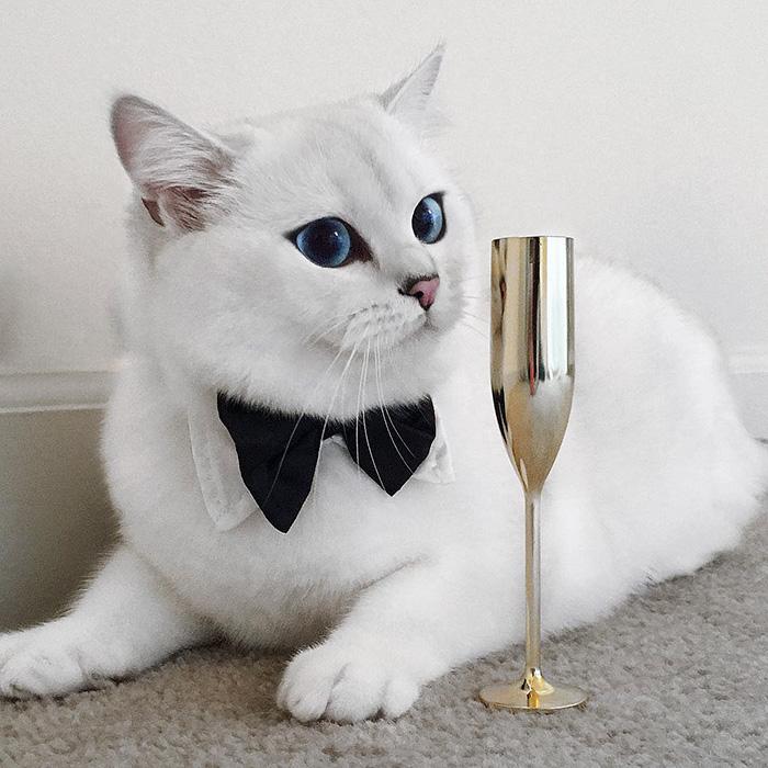 british-shorthair-cat-most-stunning-beautiful-blue-eyes (7)