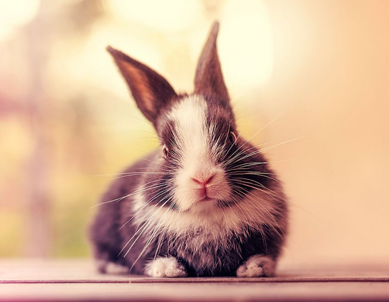 cute-adorable-rabbit-bunny-baby-growing-up-photos (11)