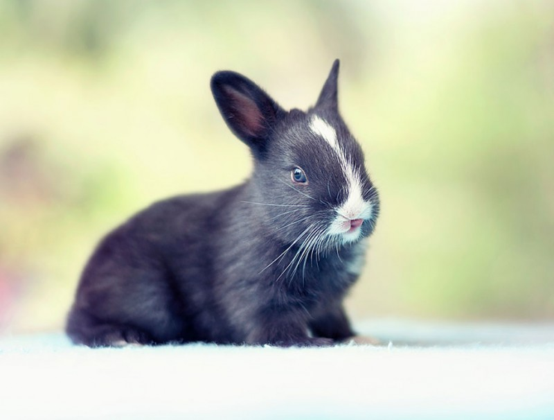 cute-adorable-rabbit-bunny-baby-growing-up-photos (14)