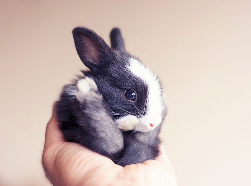 cute-adorable-rabbit-bunny-baby-growing-up-photos (5)