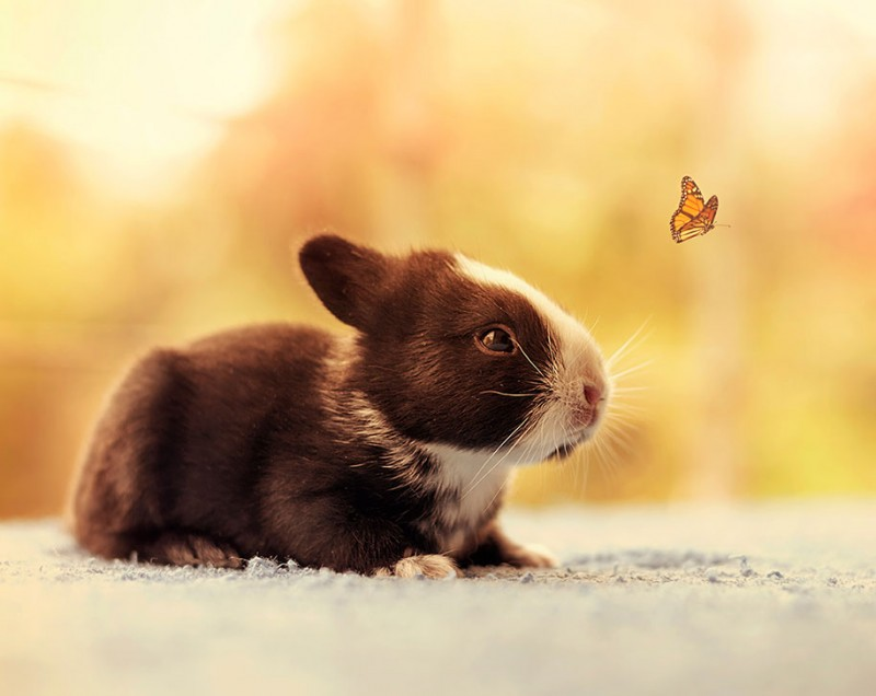 cute-adorable-rabbit-bunny-baby-growing-up-photos (7)