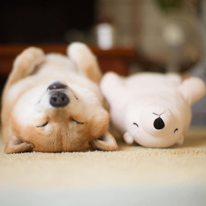 funny-cute-pup-dog-sleep-plush-bear-toy (2)