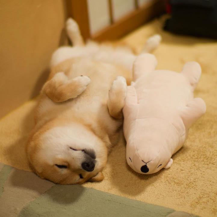funny-cute-pup-dog-sleep-plush-bear-toy (3)
