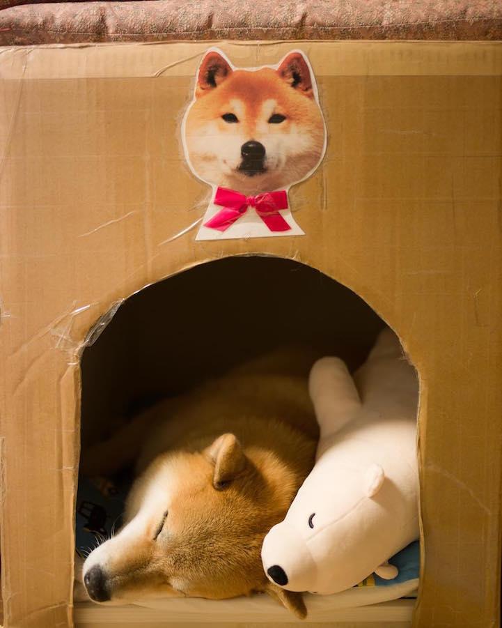 funny-cute-pup-dog-sleep-plush-bear-toy (4)
