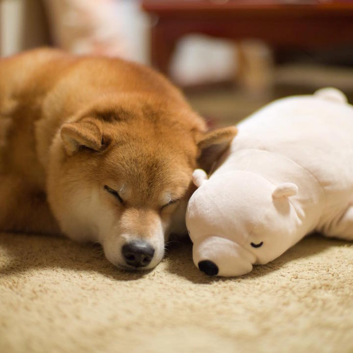 funny-cute-pup-dog-sleep-plush-bear-toy (5)