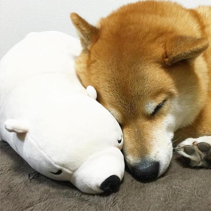 funny-cute-pup-dog-sleep-plush-bear-toy (6)