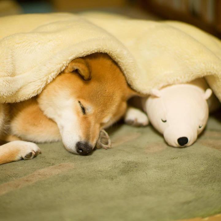 funny-cute-pup-dog-sleep-plush-bear-toy (7)