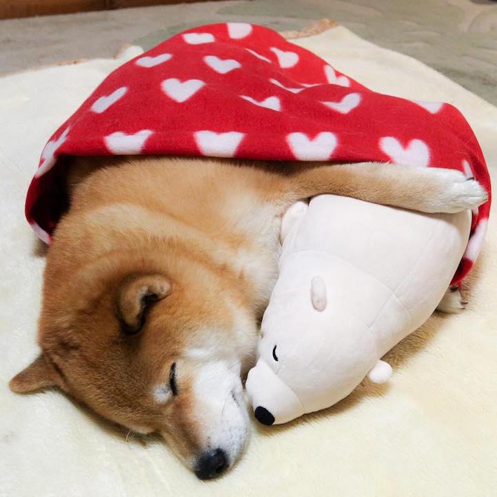 funny-cute-pup-dog-sleep-plush-bear-toy (8)