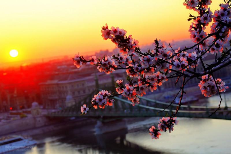 wonderful-beautiful-budapest-Hungary-sunset-dawn-photos (9)