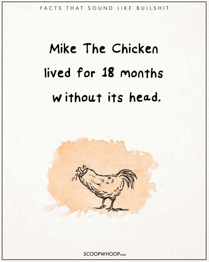 Absurd-true-bullshit-facts-funny-illustrations-comics (11)