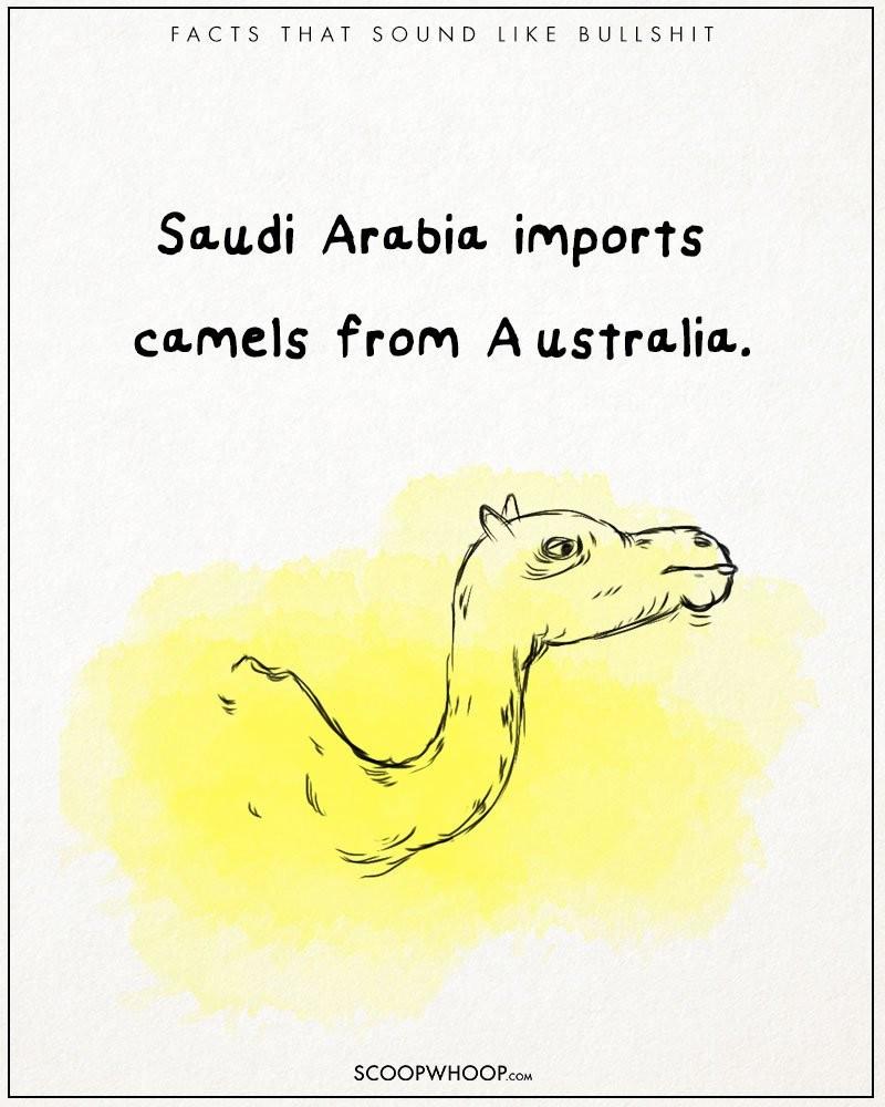 Absurd-true-bullshit-facts-funny-illustrations-comics (17)