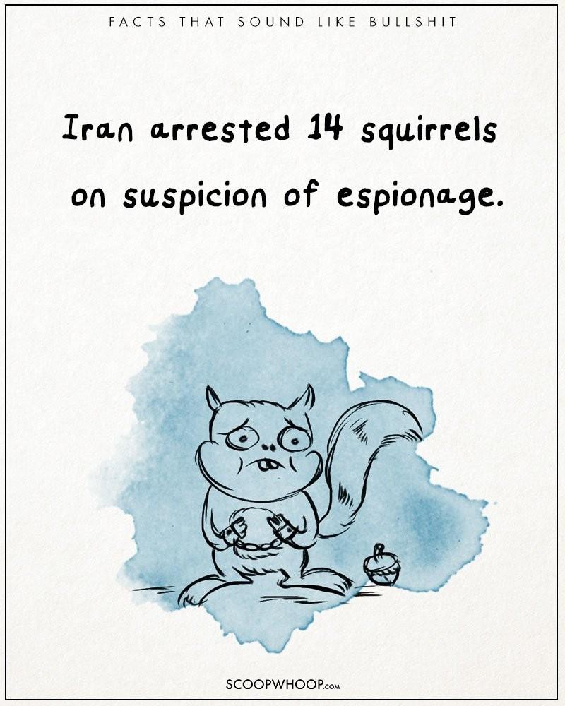 Absurd-true-bullshit-facts-funny-illustrations-comics (9)
