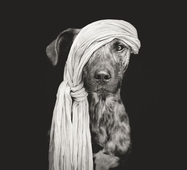 adorable-Playful-dogs-portraits-true-character (2)