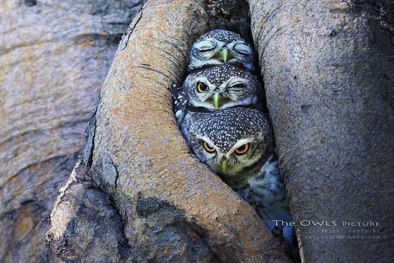 adorable-cute-bird-owl-photographs-pictures (1)