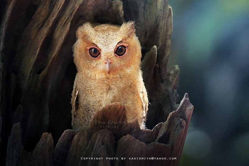 adorable-cute-bird-owl-photographs-pictures (11)