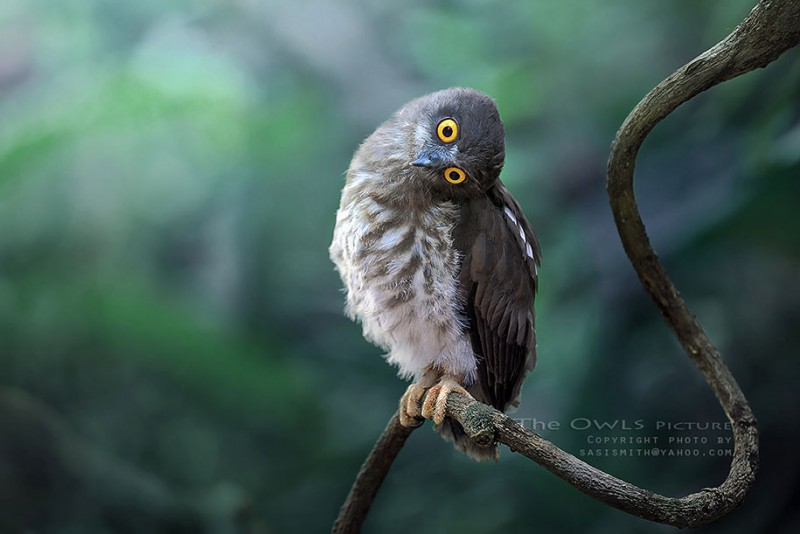 adorable-cute-bird-owl-photographs-pictures (13)
