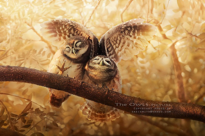 adorable-cute-bird-owl-photographs-pictures (3)