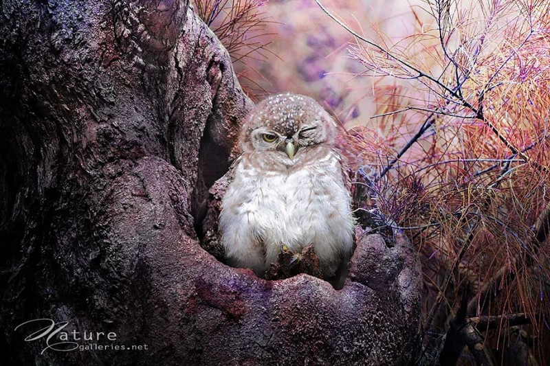 adorable-cute-bird-owl-photographs-pictures (4)