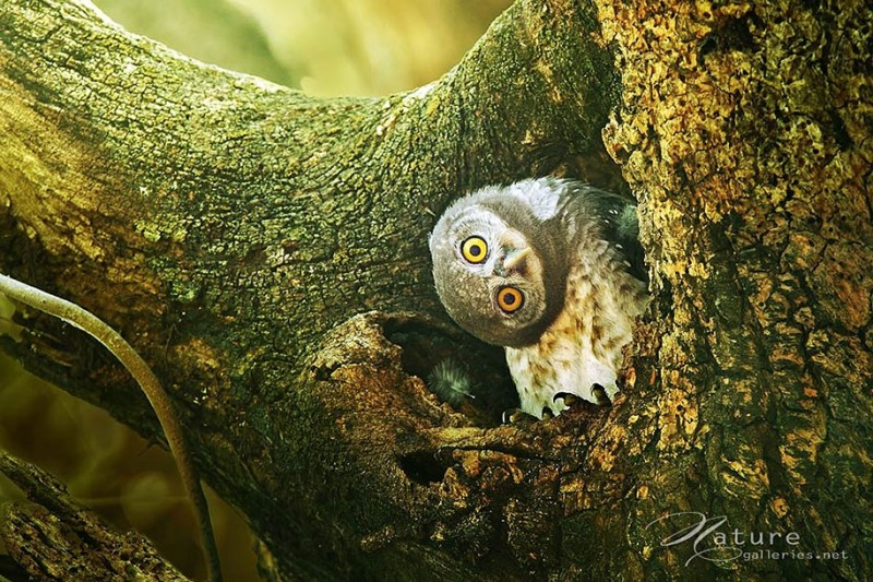 adorable-cute-bird-owl-photographs-pictures (5)