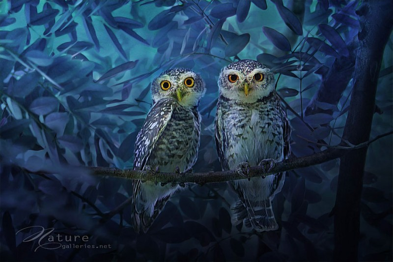 adorable-cute-bird-owl-photographs-pictures (6)