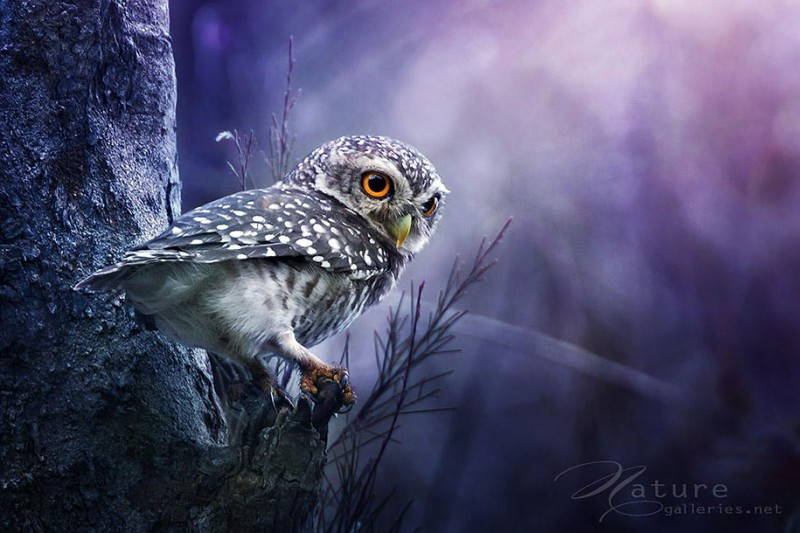 adorable-cute-bird-owl-photographs-pictures (7)