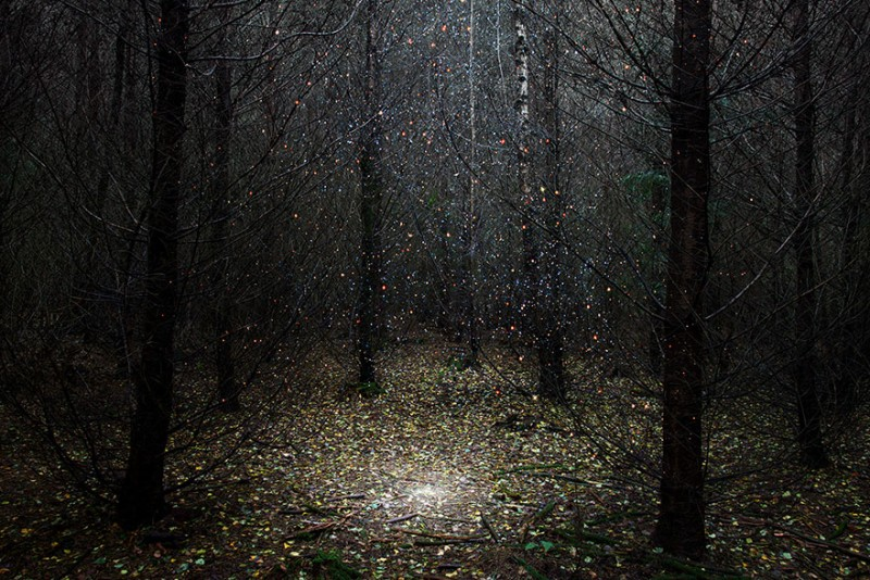 beautiful-ghostly-fairy-tale-forest-photograhy (1)