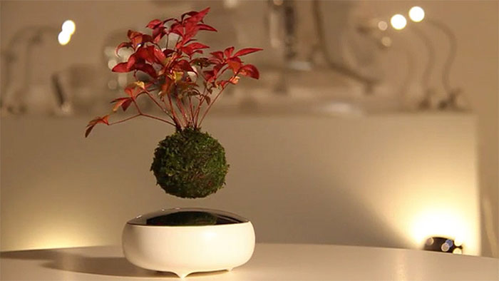 cool-design-floating-bonsai-trees-in-air (2)