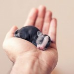 Photographer captures baby bunnies growing up for 30 days to celebrate new lives