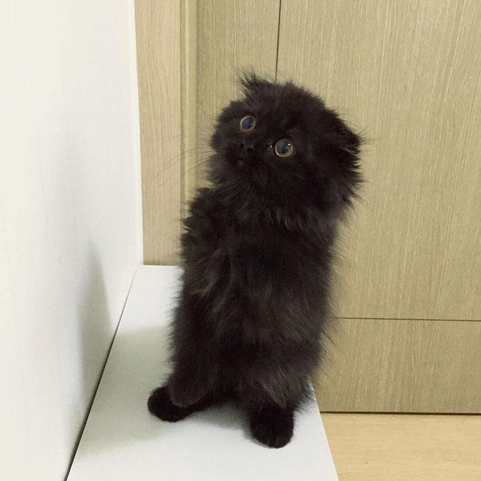 funny-biggest-cute-eyes-cat-black-gimo (10)