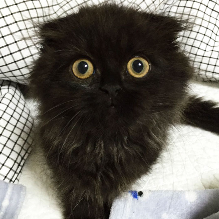 funny-biggest-cute-eyes-cat-black-gimo (11)