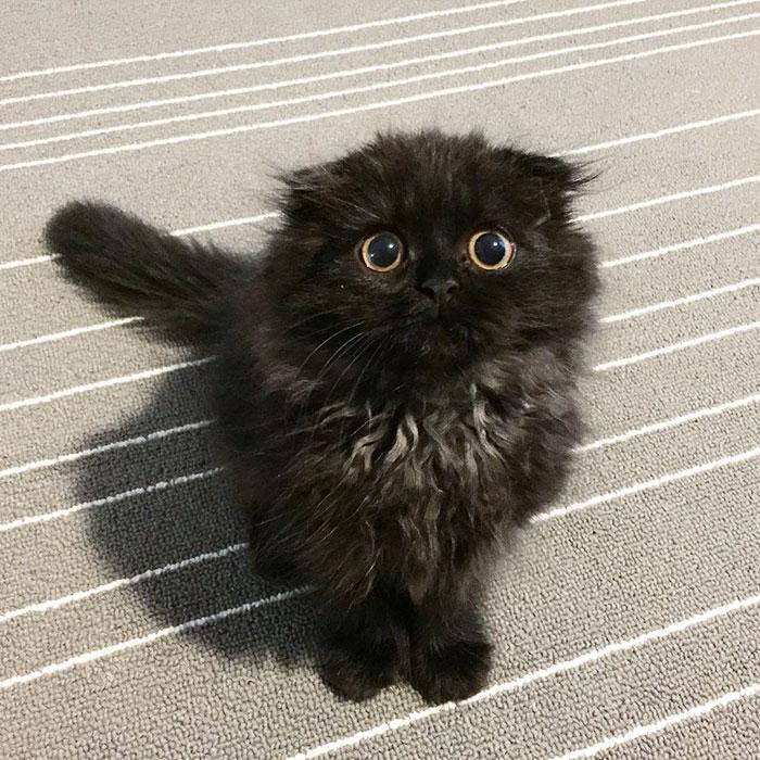 funny-biggest-cute-eyes-cat-black-gimo (12)