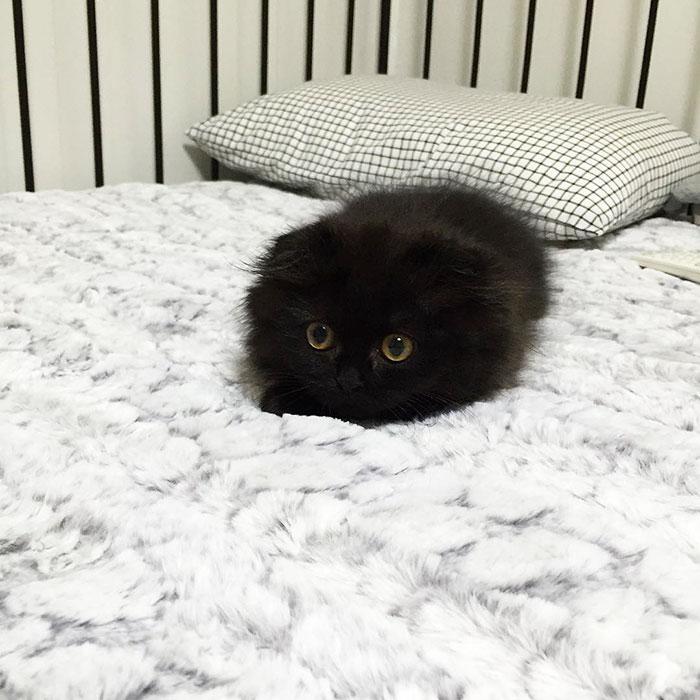funny-biggest-cute-eyes-cat-black-gimo (13)