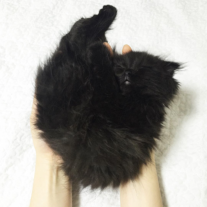 funny-biggest-cute-eyes-cat-black-gimo (15)