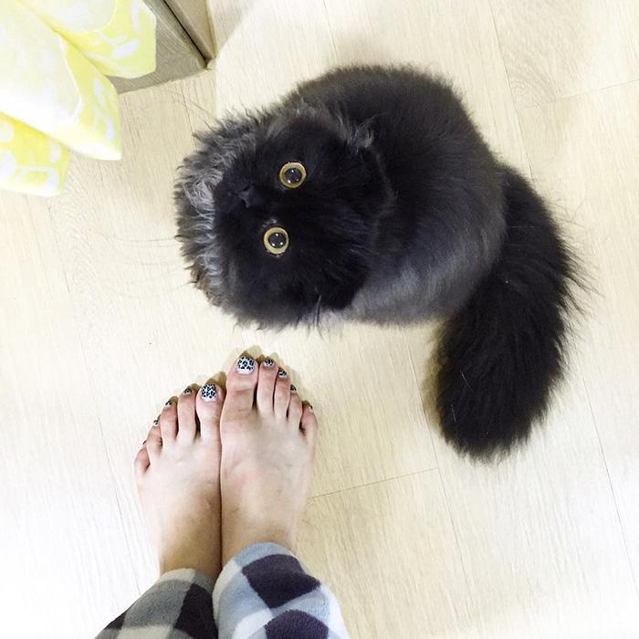 funny-biggest-cute-eyes-cat-black-gimo (16)