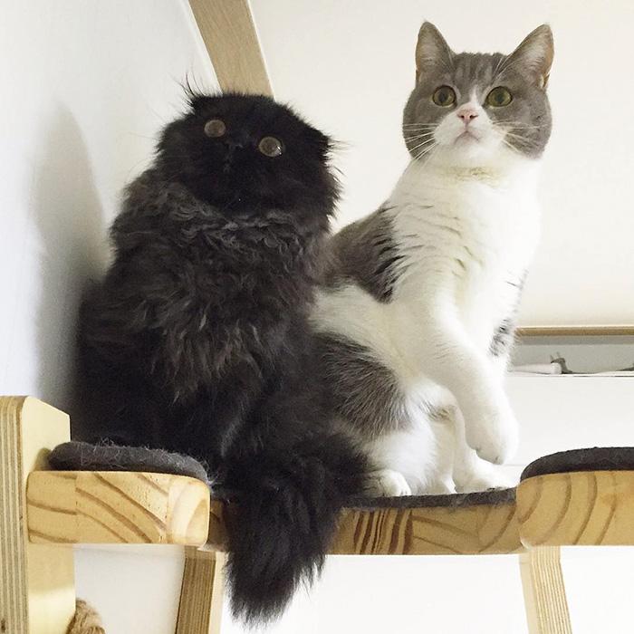 funny-biggest-cute-eyes-cat-black-gimo (2)
