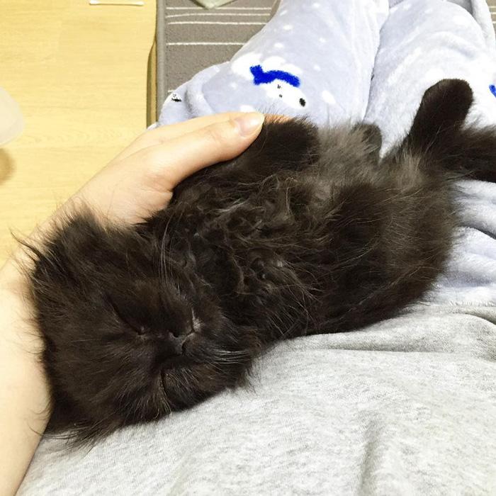 funny-biggest-cute-eyes-cat-black-gimo (3)