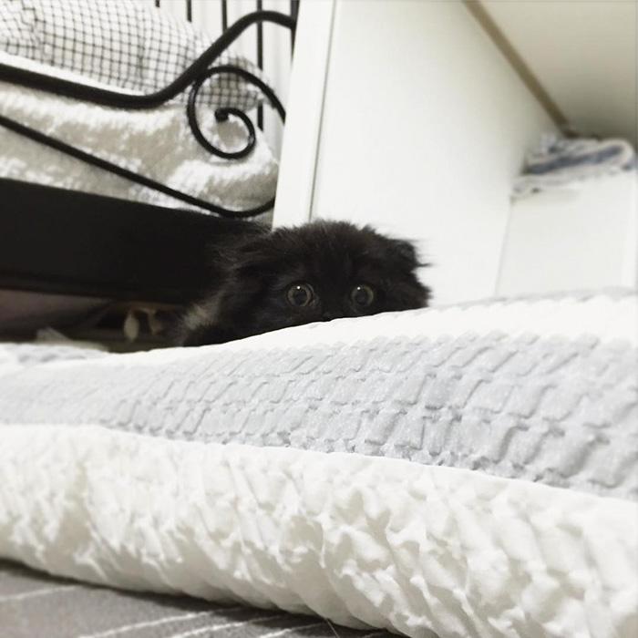 funny-biggest-cute-eyes-cat-black-gimo (4)