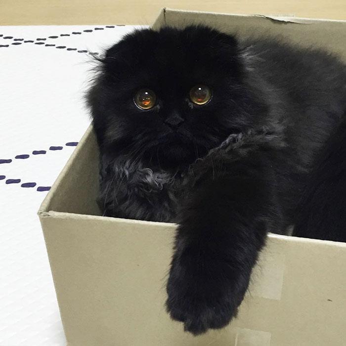 funny-biggest-cute-eyes-cat-black-gimo (6)