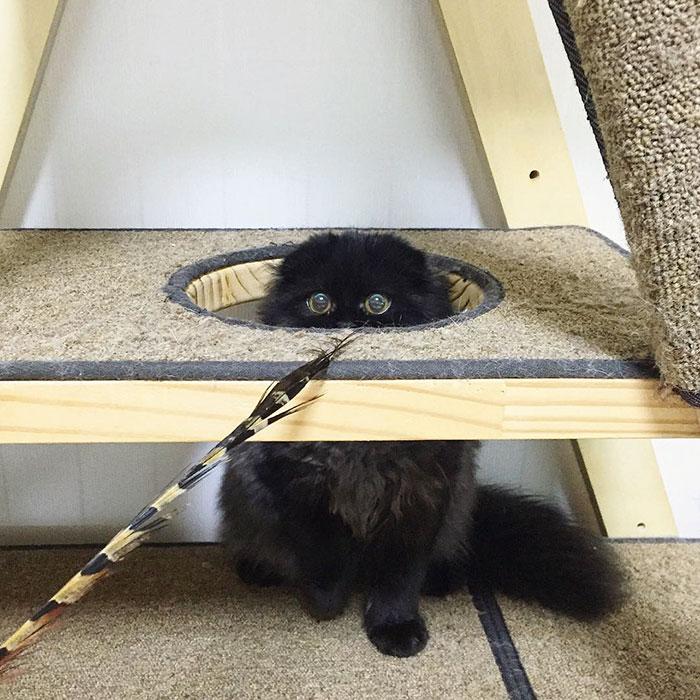 funny-biggest-cute-eyes-cat-black-gimo (7)