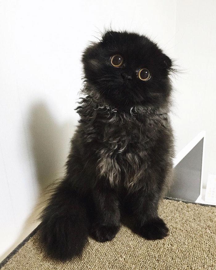 funny-biggest-cute-eyes-cat-black-gimo (9)