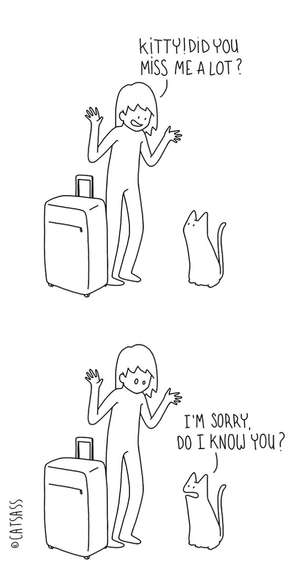 funny-comics-drawings-Catsass-cat-human-relationship-thinks (4)