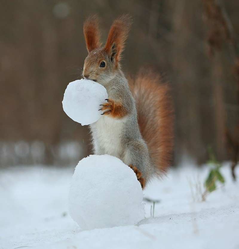funny-cute-squirrel-fighting-playing-pictures (10)