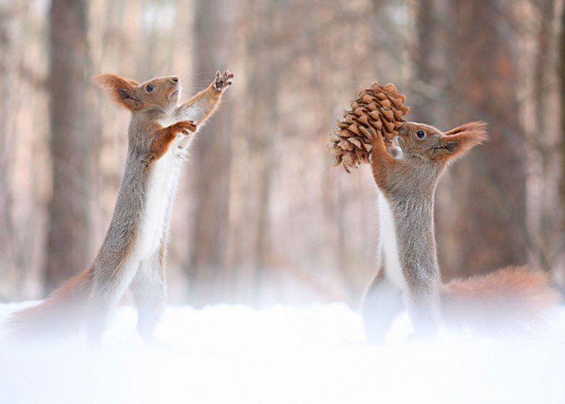 funny-cute-squirrel-fighting-playing-pictures (11)