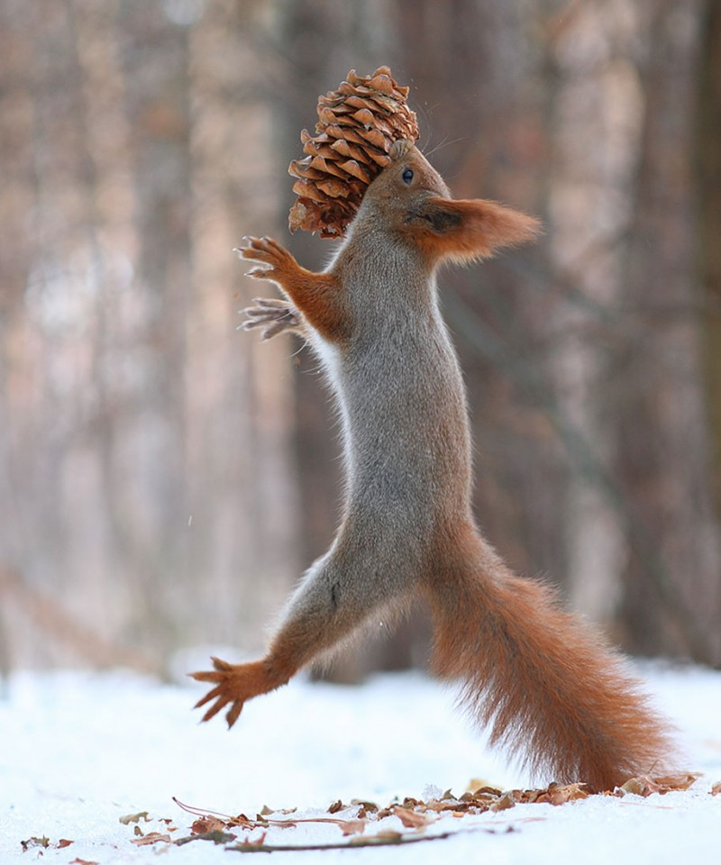 funny-cute-squirrel-fighting-playing-pictures (13)