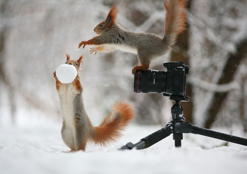 funny-cute-squirrel-fighting-playing-pictures (2)
