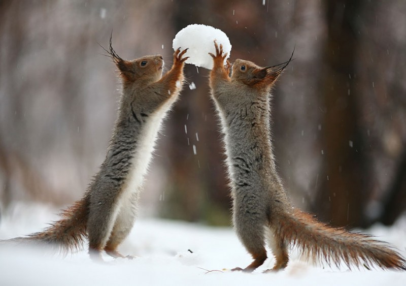 funny-cute-squirrel-fighting-playing-pictures (3)