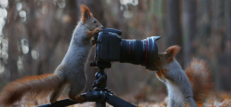 funny-cute-squirrel-fighting-playing-pictures (7)