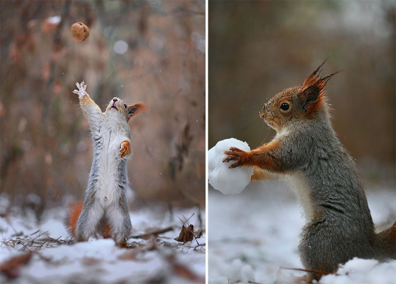 funny-cute-squirrel-fighting-playing-pictures (8)