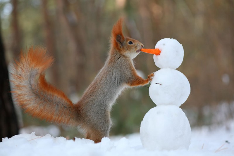 funny-cute-squirrel-fighting-playing-pictures (9)