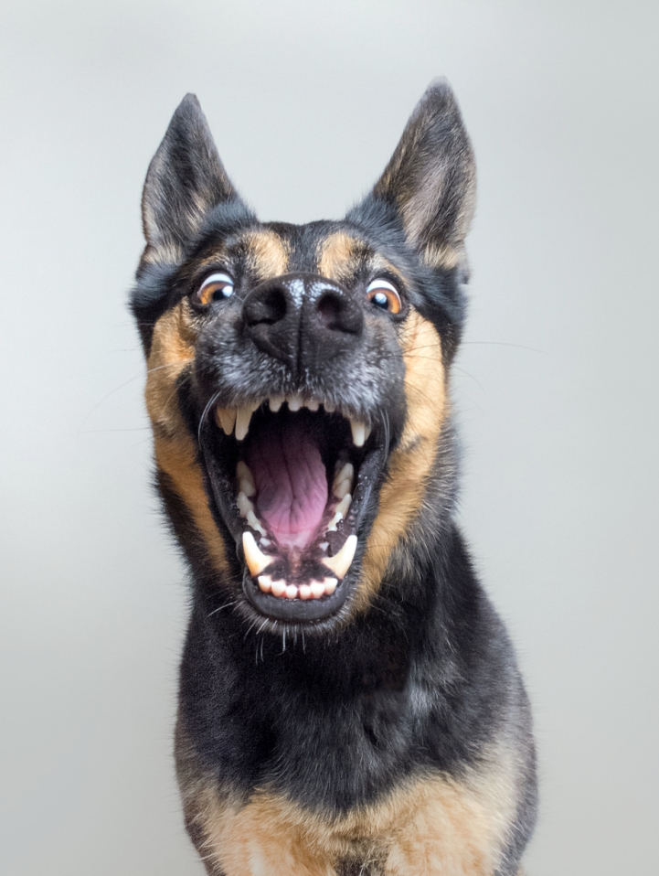 funny-expressive-dog-portraits-photos (1)